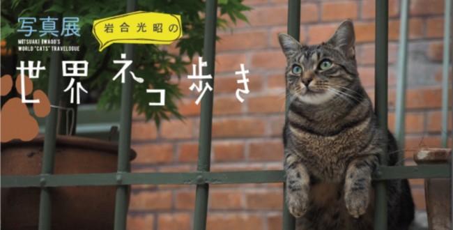 「岩合光昭の世界ネコ歩き」写真展開催と写真集刊行のお知らせ